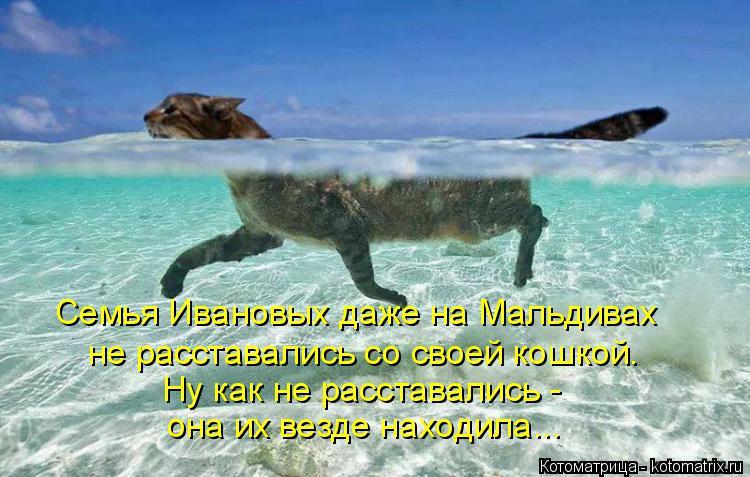 Котоматрица: Семья Ивановых даже на Мальдивах  не расставались со своей кошкой. Ну как не расставались -  она их везде находила...