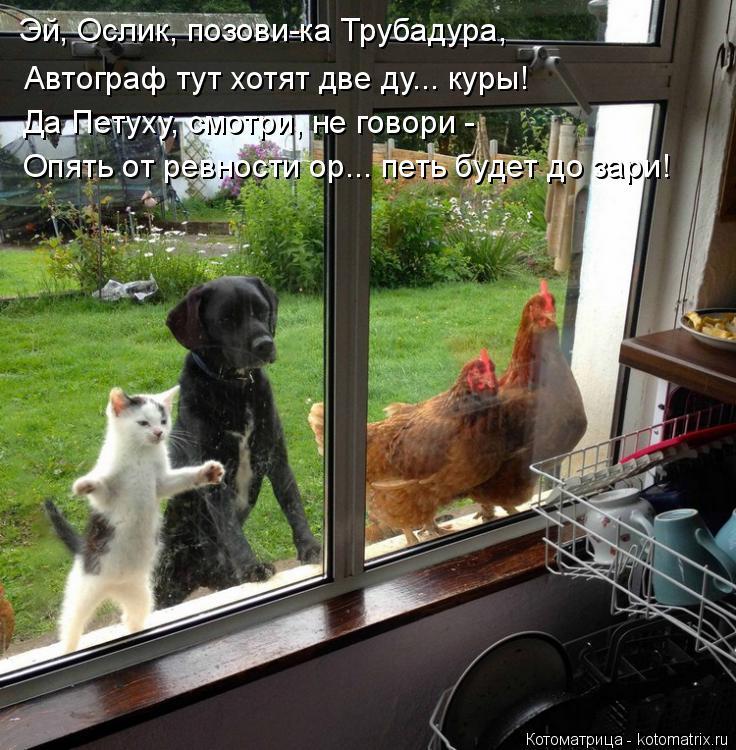 Котоматрица: Эй, Ослик, позови-ка Трубадура, Автограф тут хотят две ду... куры! Да Петуху, смотри, не говори -  Опять от ревности ор... петь будет до зари!