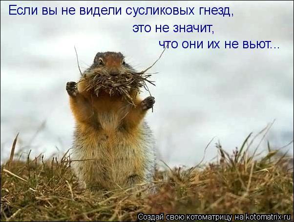 Котоматрица: Если вы не видели сусликовых гнезд, это не значит,  что они их не вьют...