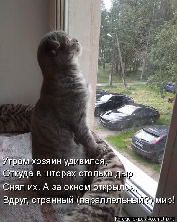 Котоматрица: Утром хозяин удивился, Откуда в шторах столько дыр. Снял их. А за окном открылся, Вдруг, странный (параллельный?) мир!