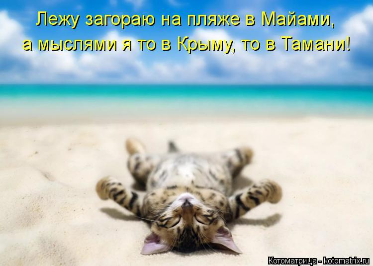 Котоматрица: Лежу загораю на пляже в Майами,  а мыслями я то в Крыму, то в Тамани!