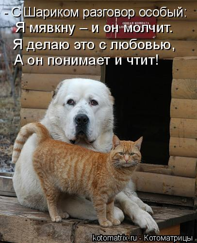 Котоматрица: - С Шариком разговор особый: Я мявкну – и он молчит. Я делаю это с любовью, А он понимает и чтит!