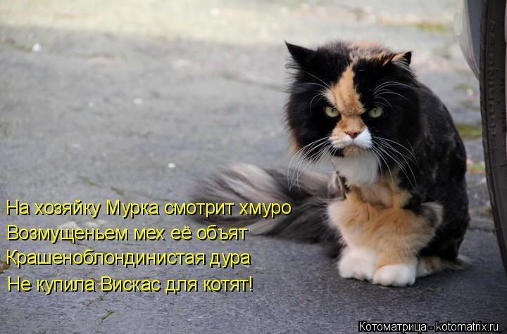 Котоматрица: На хозяйку Мурка смотрит хмуро   Возмущеньем мех её объят  Крашеноблондинистая дура  Не купила Вискас для котят!