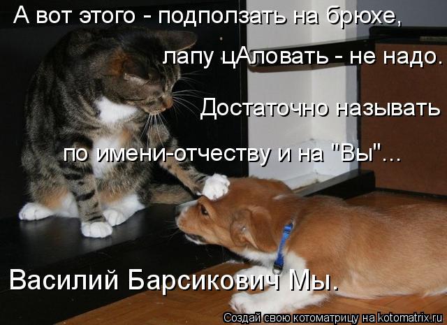 """Котоматрица: А вот этого - подползать на брюхе, лапу цАловать - не надо. Достаточно называть по имени-отчеству и на """"Вы""""... Василий Барсикович Мы."""