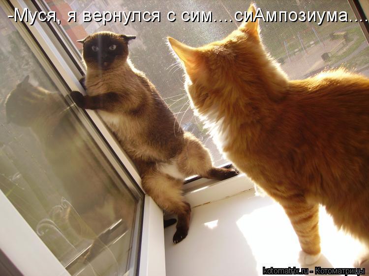 Котоматрица: -Муся, я вернулся с сим....сиАмпозиума.....