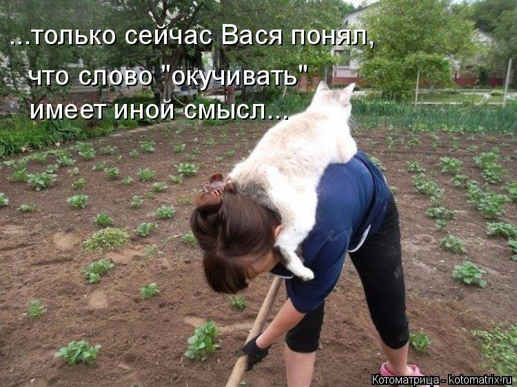 """Котоматрица: ...только сейчас Вася понял, что слово """"окучивать"""" имеет иной смысл..."""