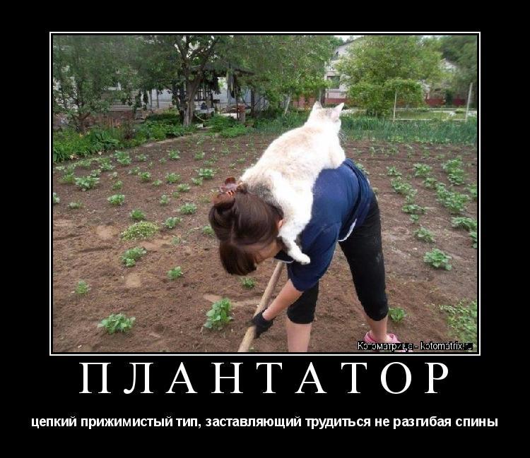 Котоматрица: ПЛАНТАТОР цепкий прижимистый тип, заставляющий трудиться не разгибая спины