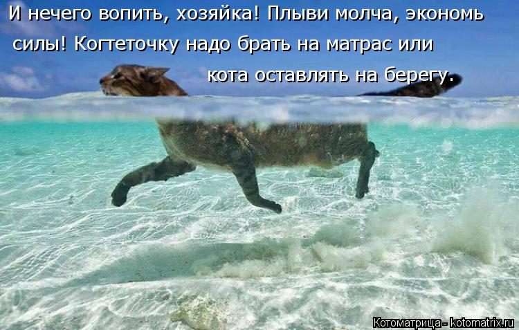 Котоматрица: И нечего вопить, хозяйка! Плыви молча, экономь  силы! Когтеточку надо брать на матрас или  кота оставлять на берегу.