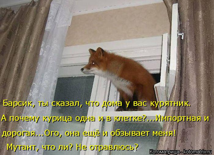 Котоматрица: Барсик, ты сказал, что дома у вас курятник. А почему курица одна и в клетке?...Импортная и дорогая...Ого, она ещё и обзывает меня! Мутант, что ли?
