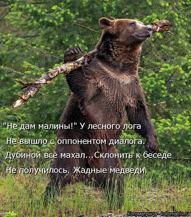 """Котоматрица: Дубиной всё махал...Склонить к беседе Не вышло с оппонентом диалога. """"Не дам малины!"""" У лесного лога Не получилось. Жадные медведи."""