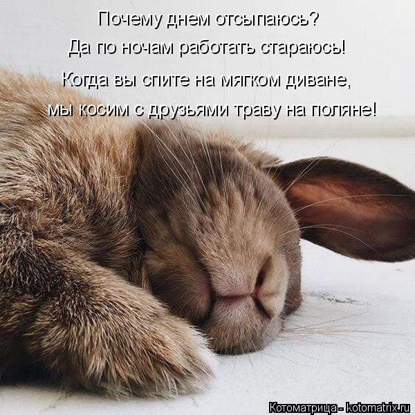 Котоматрица: Почему днем отсыпаюсь? Да по ночам работать стараюсь! Когда вы спите на мягком диване,  мы косим с друзьями траву на поляне!