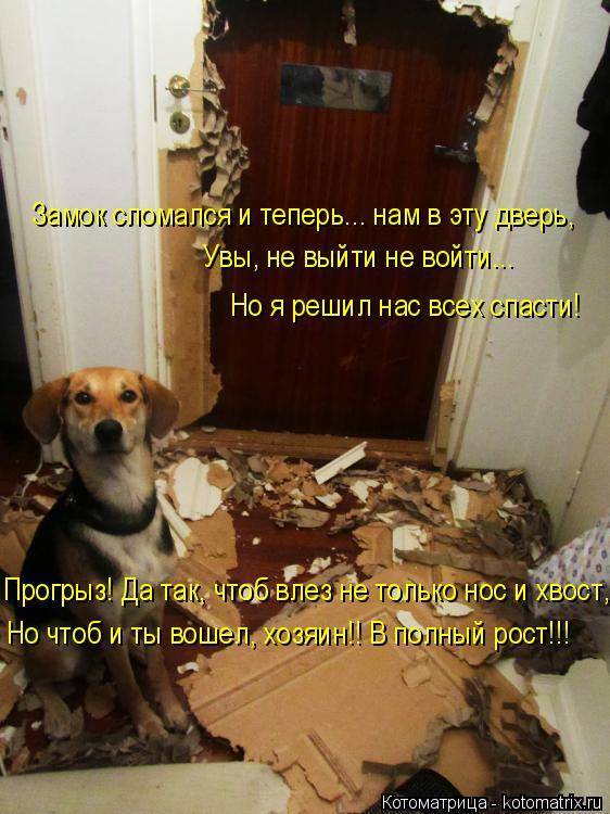 Котоматрица: Замок сломался и теперь... нам в эту дверь, Увы, не выйти не войти...  Прогрыз! Да так, чтоб влез не только нос и хвост, Но чтоб и ты вошел, хозяин!!