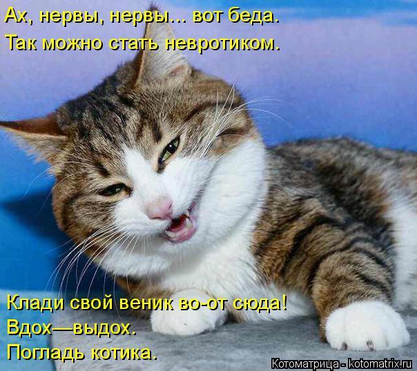 Котоматрица: Ах, нервы, нервы... вот беда. Так можно стать невротиком. Клади свой веник во-от сюда! Вдох—выдох. Погладь котика.