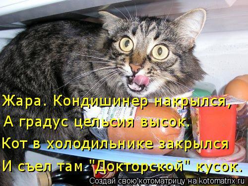 """Котоматрица: Жара. Кондишинер накрылся, И съел там """"Докторской"""" кусок. Кот в холодильнике закрылся А градус цельсия высок."""