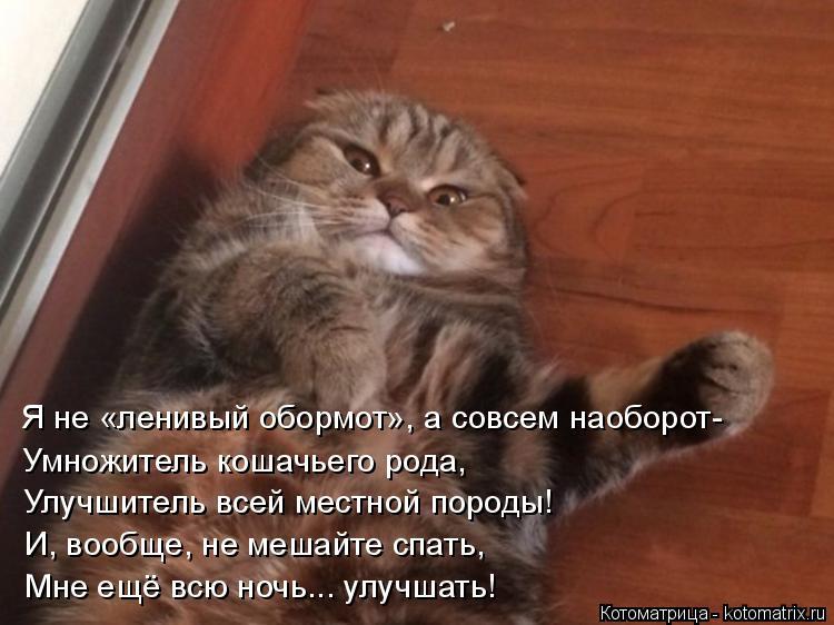 Котоматрица: Я не «ленивый обормот», а совсем наоборот- Умножитель кошачьего рода,  Улучшитель всей местной породы! И, вообще, не мешайте спать, Мне ещё вс