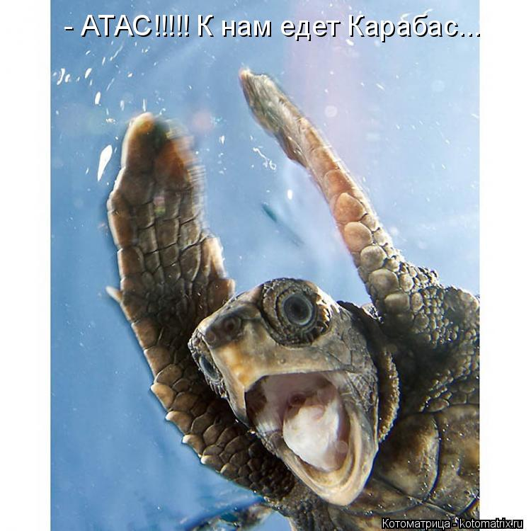 Котоматрица: - АТАС!!!!! К нам едет Карабас...