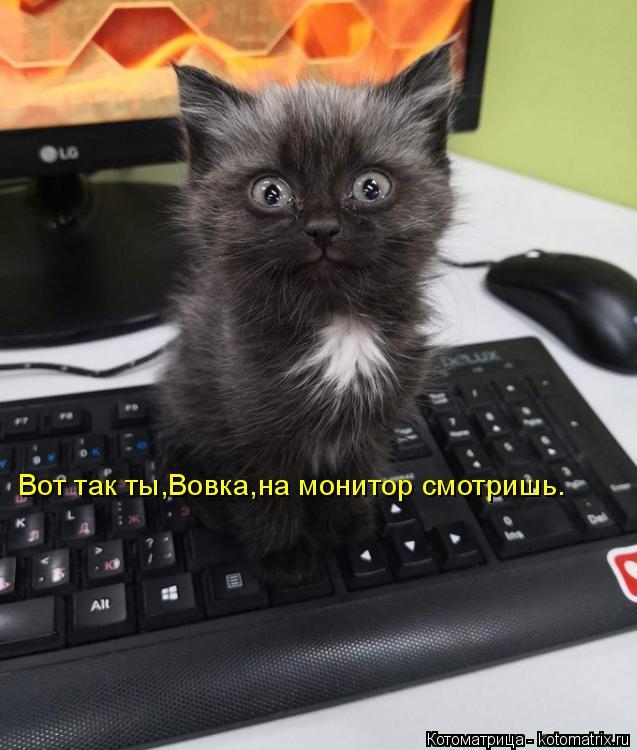 Котоматрица: Вот так ты,Вовка,на монитор смотришь.