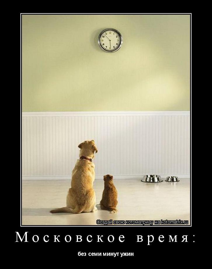 Котоматрица: Московское время: без семи минут ужин
