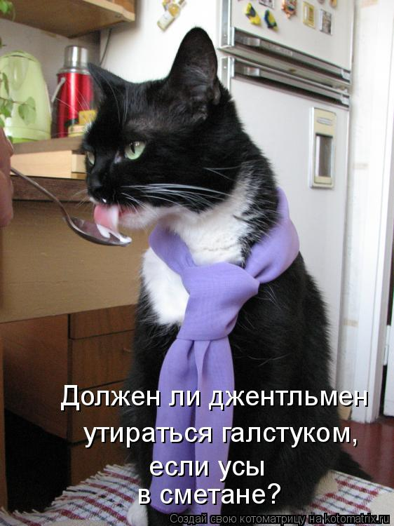 Котоматрица: Должен ли джентльмен  утираться галстуком, если усы в сметане?