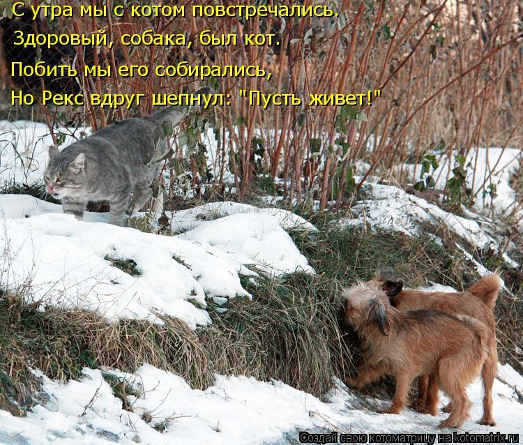 """Котоматрица: С утра мы с котом повстречались. Здоровый, собака, был кот. Побить мы его собирались, Но Рекс вдруг шепнул: """"Пусть живет!"""""""