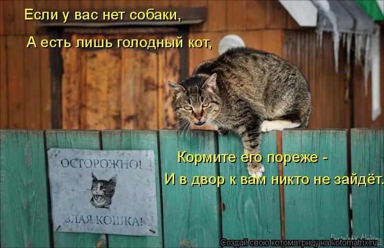 Котоматрица: Если у вас нет собаки, А есть лишь голодный кот, Кормите его пореже -  И в двор к вам никто не зайдёт.