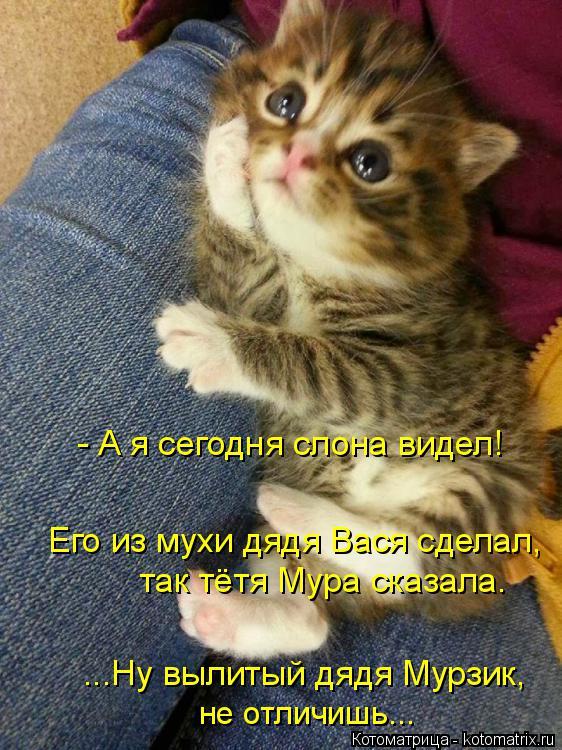 Котоматрица: - А я сегодня слона видел! Его из мухи дядя Вася сделал, так тётя Мура сказала. ...Ну вылитый дядя Мурзик, не отличишь...