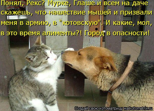 """Котоматрица: Понял, Рекс? Мурке, Глаше и всем на даче скажешь, что нашествие мышей и призвали меня в армию, в """"котовскую"""". И какие, мол, в это время алименты?!"""