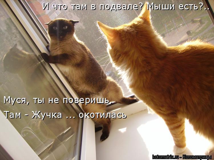 Котоматрица: И что там в подвале? Мыши есть?.. Муся, ты не поверишь. Там - Жучка ... окотилась