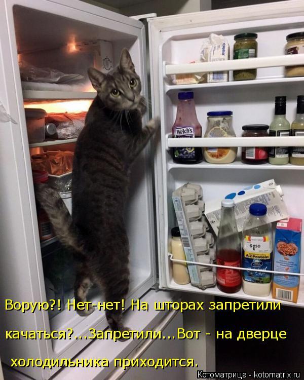 Котоматрица: качаться?...Запретили...Вот - на дверце   холодильника приходится. Ворую?! Нет-нет! На шторах запретили