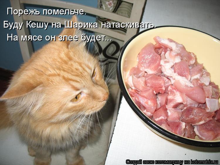 Котоматрица: Порежь помельче. Буду Кешу на Шарика натаскивать. На мясе он злее будет...