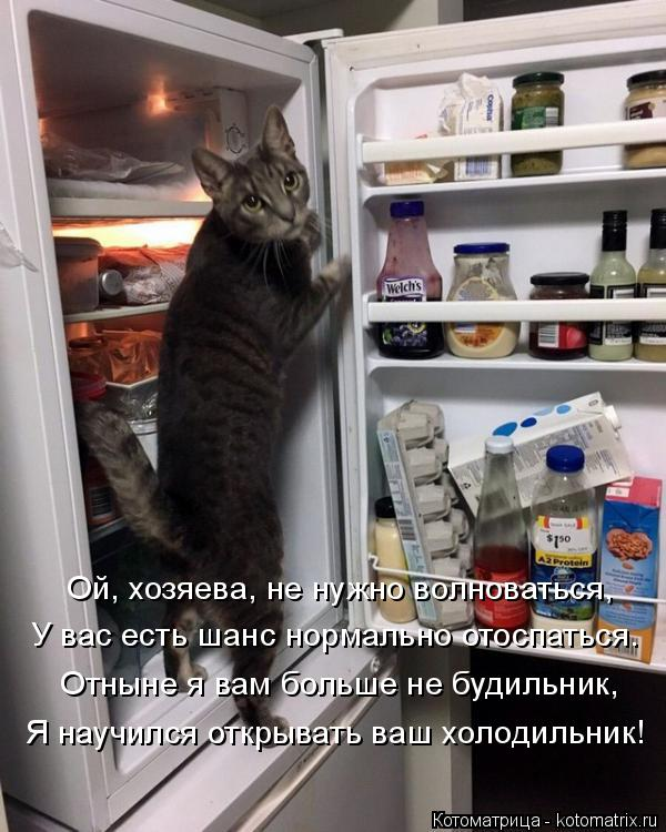 Котоматрица: Ой, хозяева, не нужно волноваться, У вас есть шанс нормально отоспаться. Отныне я вам больше не будильник, Я научился открывать ваш холодиль?