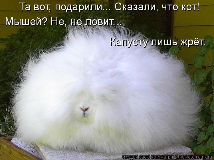 Котоматрица: Та вот, подарили... Сказали, что кот! Мышей? Не, не ловит... Капусту лишь жрёт.