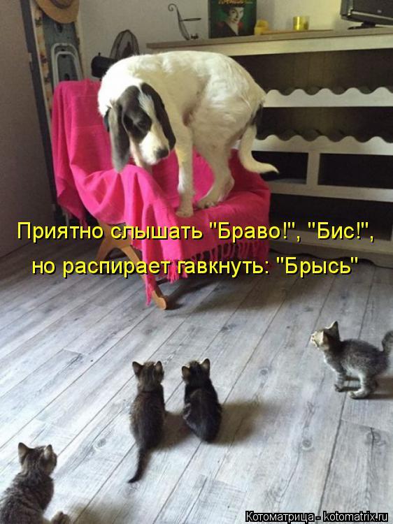 """Котоматрица: Приятно слышать """"Браво!"""", """"Бис!"""", но распирает гавкнуть: """"Брысь"""""""