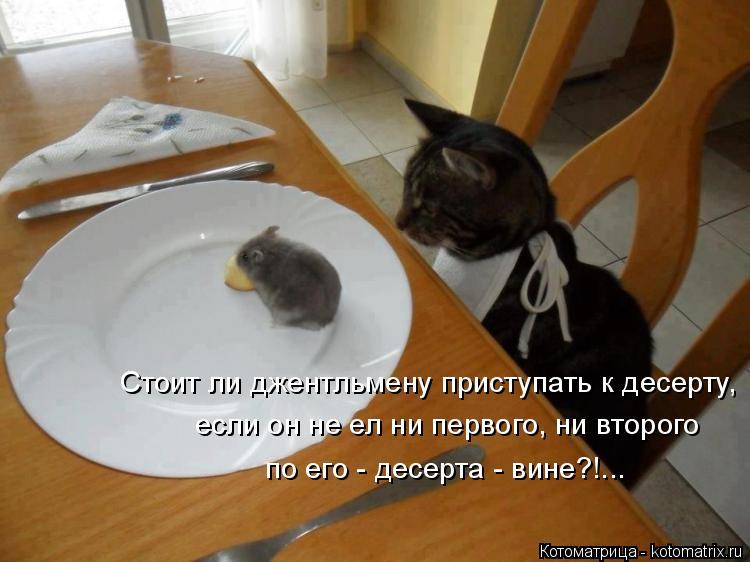 Котоматрица: Стоит ли джентльмену приступать к десерту, если он не ел ни первого, ни второго по его - десерта - вине?!...