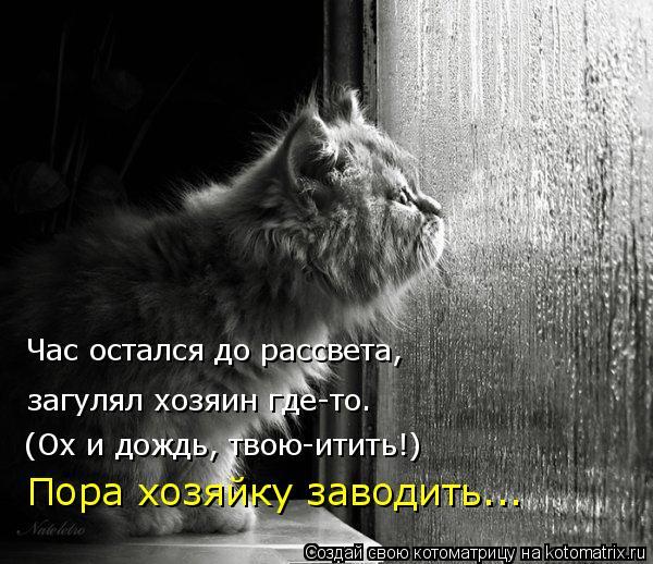 Котоматрица: загулял хозяин где-то. (Ох и дождь, твою-итить!) Час остался до рассвета, Пора хозяйку заводить...