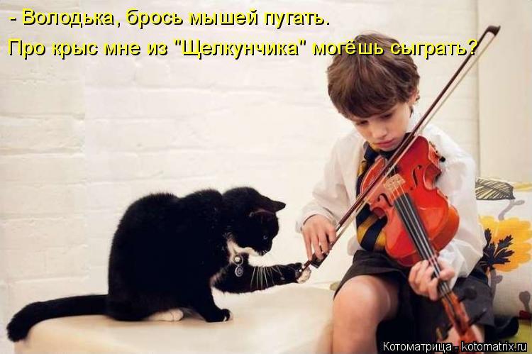 """Котоматрица: - Володька, брось мышей пугать. Про крыс мне из """"Щелкунчика"""" могёшь сыграть?"""