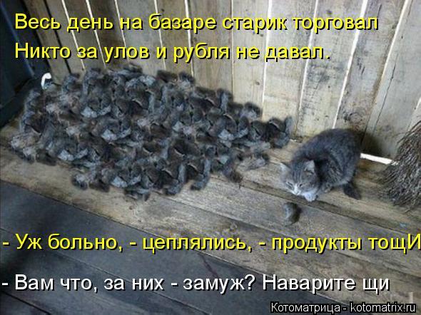 Котоматрица: Весь день на базаре старик торговал Никто за улов и рубля не давал. - Уж больно, - цеплялись, - продукты тощИ. - Вам что, за них - замуж? Наварите ?