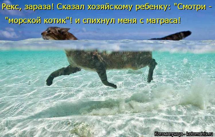 """Котоматрица: Рекс, зараза! Сказал хозяйскому ребенку: """"Смотри -  """"морской котик""""! и спихнул меня с матраса!"""