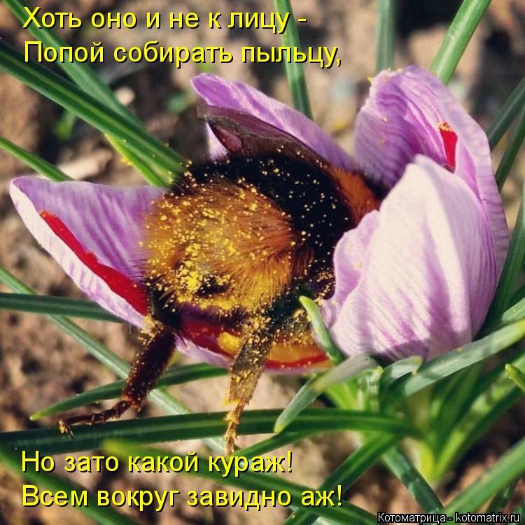 Котоматрица: Хоть оно и не к лицу - Попой собирать пыльцу, Но зато какой кураж! Всем вокруг завидно аж!