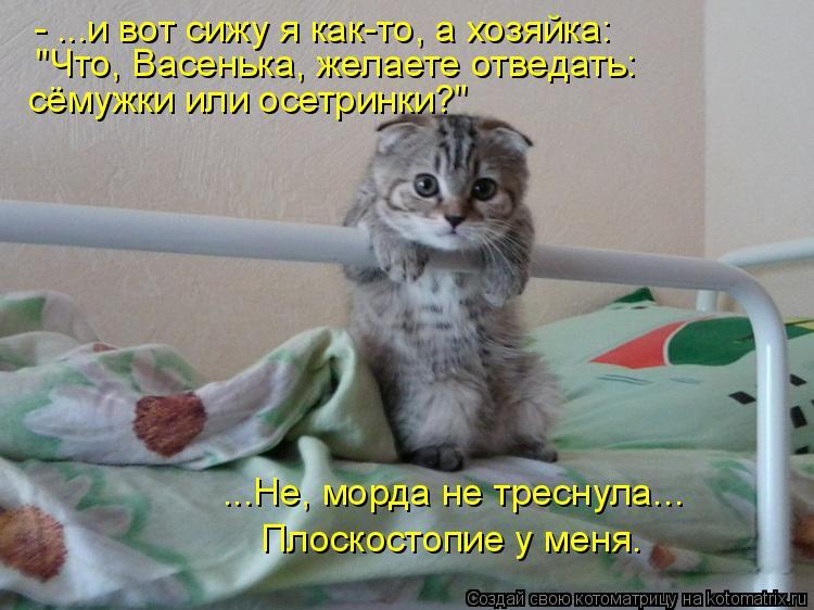 """Котоматрица: - ...и вот сижу я как-то, а хозяйка: """"Что, Васенька, желаете отведать: сёмужки или осетринки?"""" ...Не, морда не треснула... Плоскостопие у меня."""