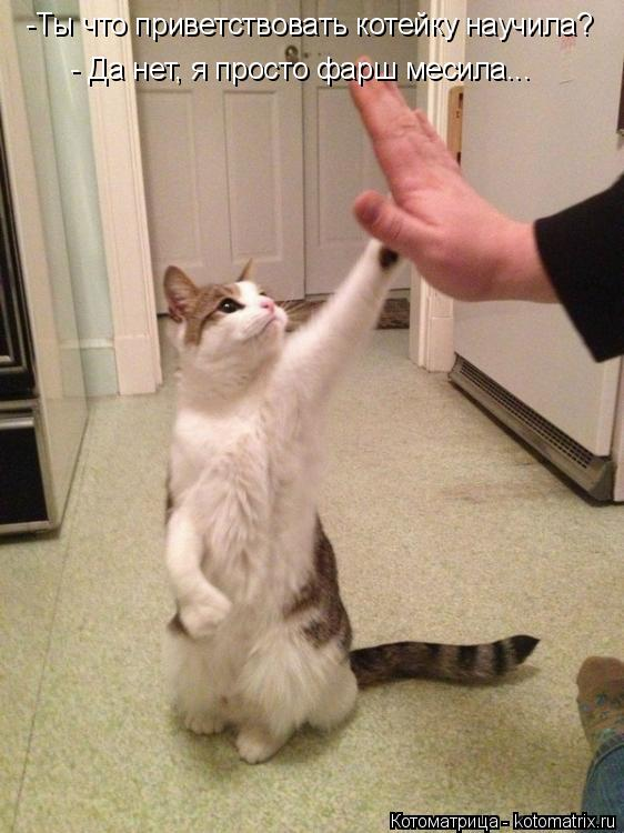 Котоматрица: -Ты что приветствовать котейку научила?  - Да нет, я просто фарш месила...