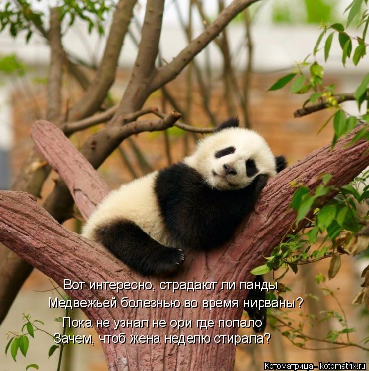 Котоматрица: Вот интересно, страдают ли панды Медвежьей болезнью во время нирваны? Пока не узнал не ори где попало Зачем, чтоб жена неделю стирала?