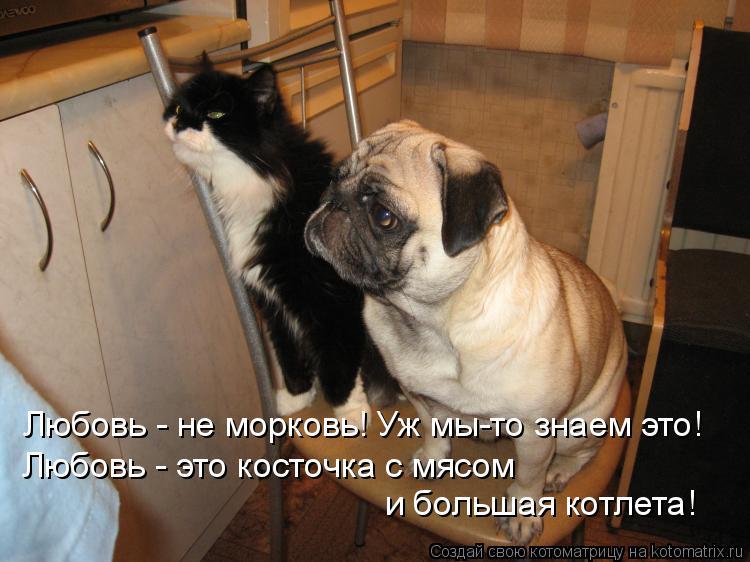 Котоматрица: Любовь - не морковь! Уж мы-то знаем это! Любовь - это косточка с мясом и большая котлета!