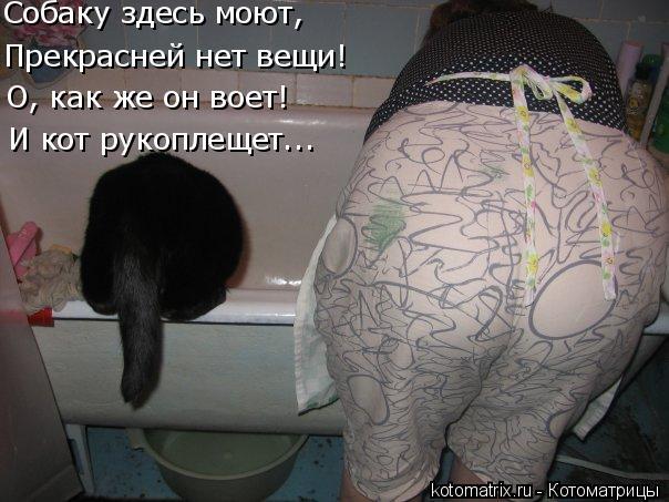 Котоматрица: И кот рукоплещет... О, как же он воет! Собаку здесь моют, Прекрасней нет вещи!