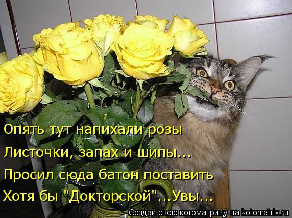 """Котоматрица: Листочки, запах и шипы... Опять тут напихали розы Просил сюда батон поставить Хотя бы """"Докторской""""...Увы..."""
