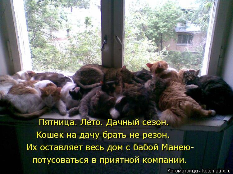 Котоматрица: Пятница. Лето. Дачный сезон.  Кошек на дачу брать не резон. Их оставляет весь дом с бабой Манею- потусоваться в приятной компании.