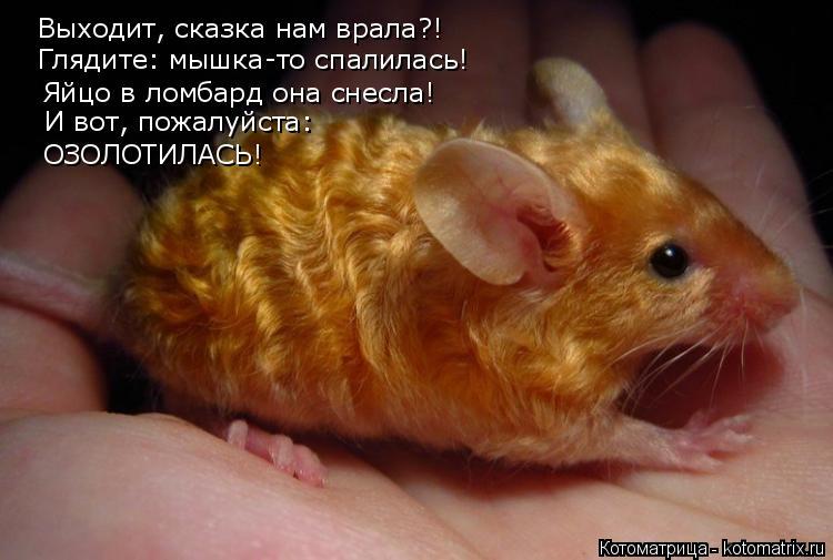 Котоматрица: Выходит, сказка нам врала?! Глядите: мышка-то спалилась! Яйцо в ломбард она снесла! И вот, пожалуйста:  ОЗОЛОТИЛАСЬ!