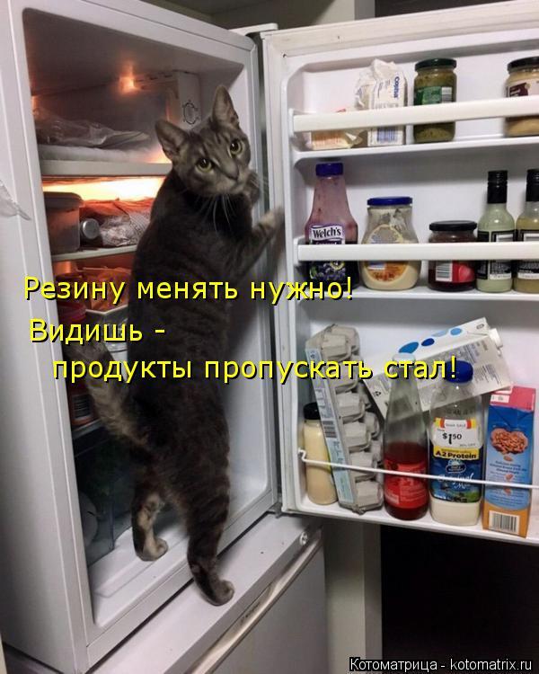 Котоматрица: Резину менять нужно! Видишь -  продукты пропускать стал!