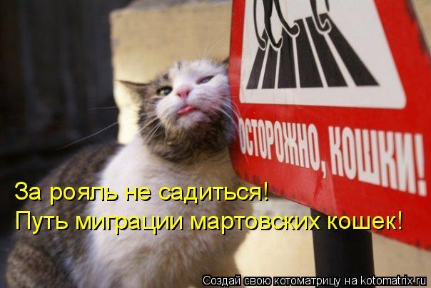 Котоматрица: За рояль не садиться!  Путь миграции мартовских кошек!