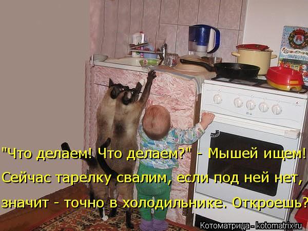 """Котоматрица: значит - точно в холодильнике. Откроешь? """"Что делаем! Что делаем?"""" - Мышей ищем! Сейчас тарелку свалим, если под ней нет,"""